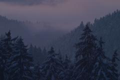 Mystischer_Winterwald